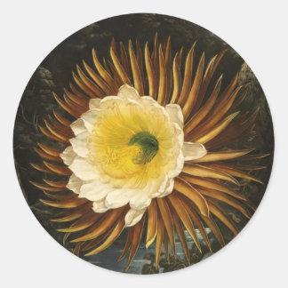 Cirio Noche-Floreciente Thornton de la flor del Pegatina Redonda