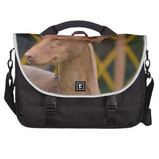 Cirneco dell Etna Laptop Messenger Bag