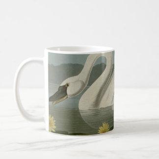 Cisne americano común taza