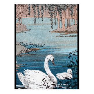 Cisne blanco elegante con el bebé postal
