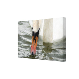Cisne blanco en agua lienzo envuelto para galerias