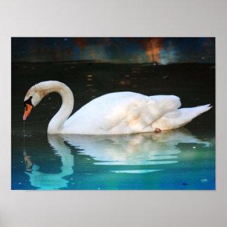 Cisne blanco en el lago posters