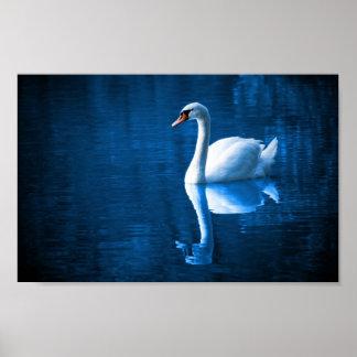 Cisne blanco en el poster de las aguas azules