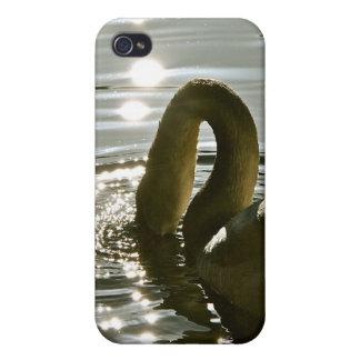 Cisne blanco en una charca en luz de la mañana iPhone 4 cárcasa