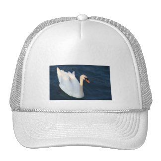 Cisne blanco - gorra
