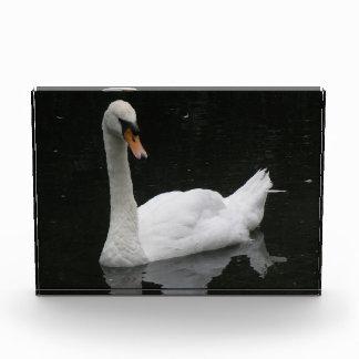 Cisne blanco hermoso decorativo
