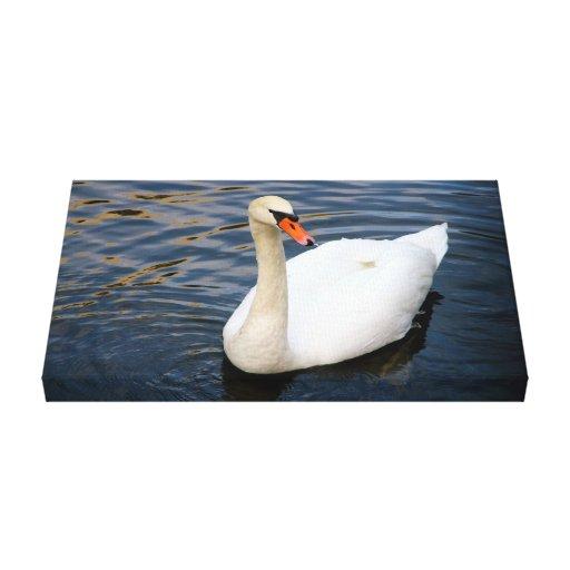 Cisne blanco hermoso en agua impresión en tela