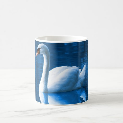 Cisne blanco hermoso en agua tazas de café