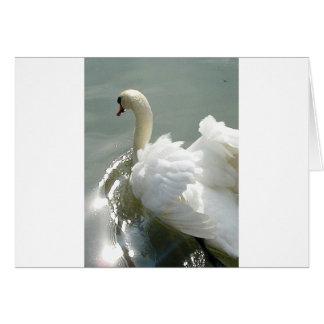 Cisne blanco hermoso tarjeta de felicitación