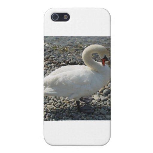 cisne blanco iPhone 5 cobertura