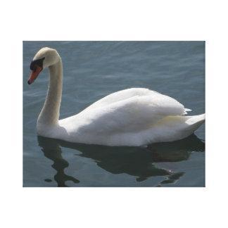 Cisne blanco impresiones en lona estiradas