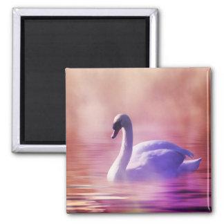 Cisne blanco que flota en un lago brumoso imán cuadrado