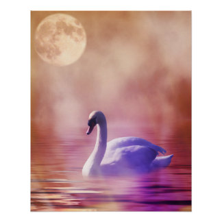 Cisne blanco que flota en un lago brumoso posters