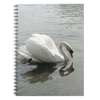 Cisne blanco, reflejando en el agua gris cuadernos