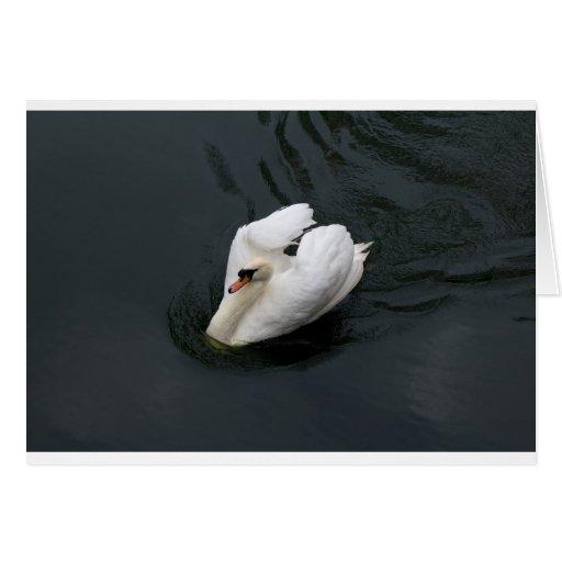 Cisne blanco tarjeta de felicitación