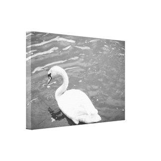 Cisne blanco y negro impresión en lona
