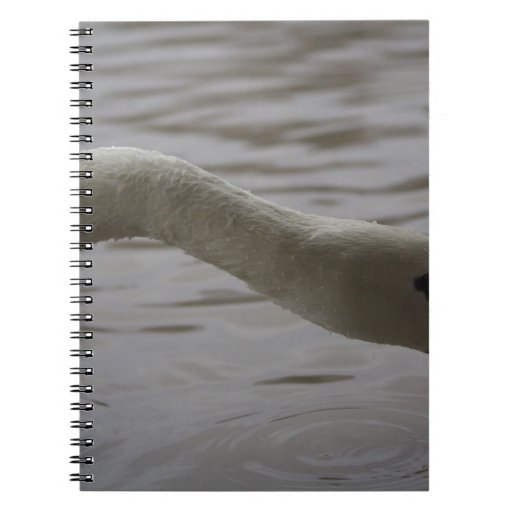 Cisne con el cuello outstretched libros de apuntes con espiral