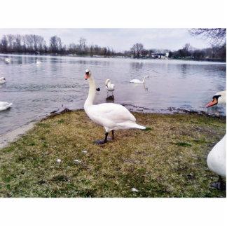 Cisne curioso del blanco del pájaro fotoescultura vertical