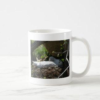 Cisne de Coscoroba de la jerarquización Taza De Café
