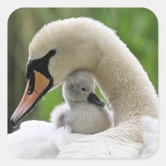 Cisne de la madre y del bebé pegatina cuadrada