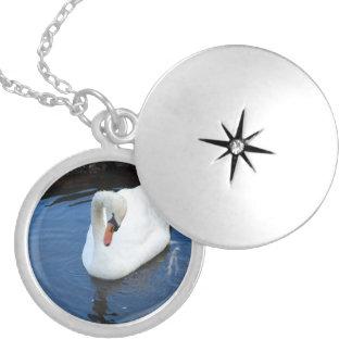 Cisne de la natación pendiente