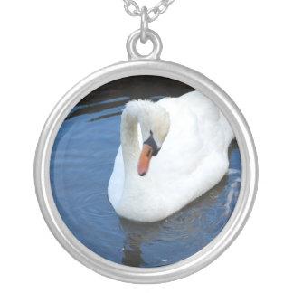 Cisne de la natación colgante