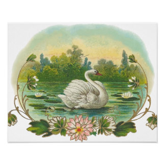 Cisne de la natación póster