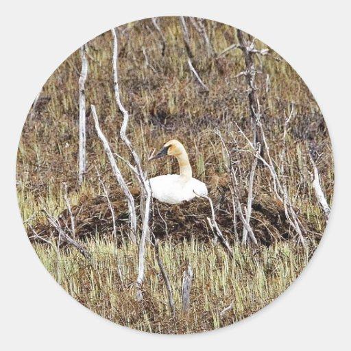 Cisne de trompetista en jerarquía etiquetas