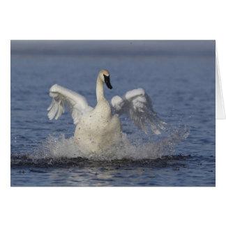 Cisne de trompetista tarjeta de felicitación