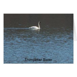 Cisne de trompetista tarjeta pequeña