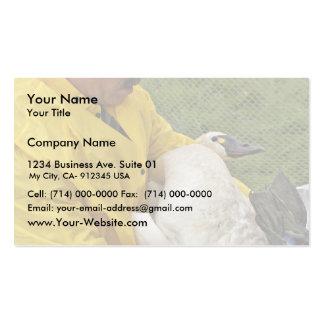 Cisne de tundra - bandas tarjetas de visita