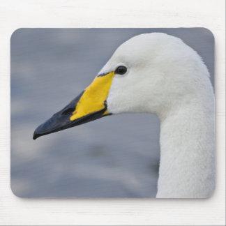 Cisne de Whooper en una charca en Reykjavik, Islan Tapetes De Ratones