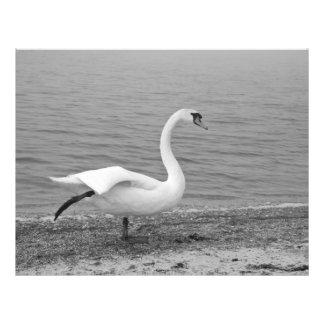 Cisne del baile tarjetas informativas
