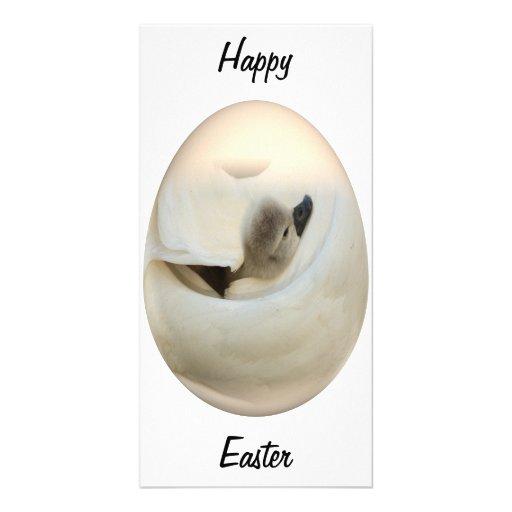 cisne del bebé del huevo de Pascua Tarjetas Fotograficas