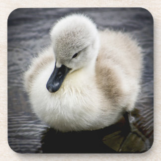 Cisne del bebé (pollo del cisne) posavasos