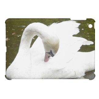 Cisne del lago