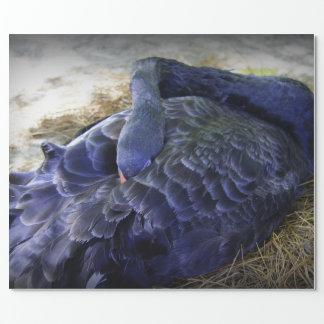 Cisne el dormir papel de regalo