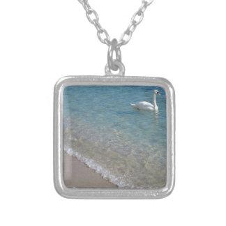 Cisne en agua de mar baja cristalina collar