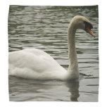 Cisne en el lago bandanas