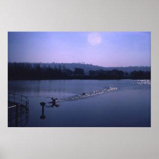Cisne en el lago inglés impresiones