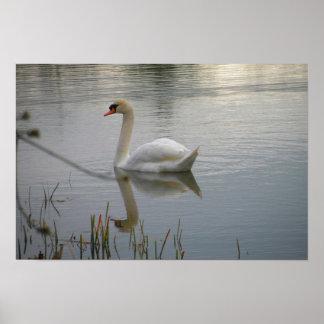 Cisne en el lago Logan Impresiones
