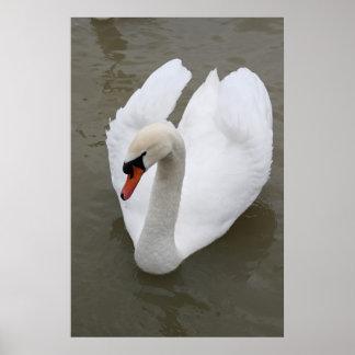 Cisne en el lago impresiones