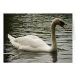 Cisne en el lago tarjeta de felicitación