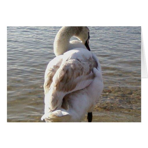 Cisne en el lago tarjetas