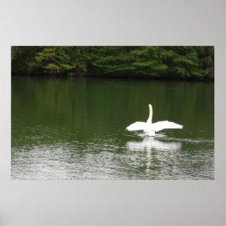 Cisne en el lago town posters