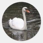 Cisne en el pegatina de Versalles