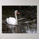 Cisne en la impresión de Versalles Impresiones
