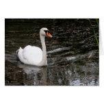 Cisne en la tarjeta de Versalles