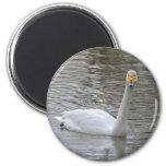 Cisne Imán De Frigorifico