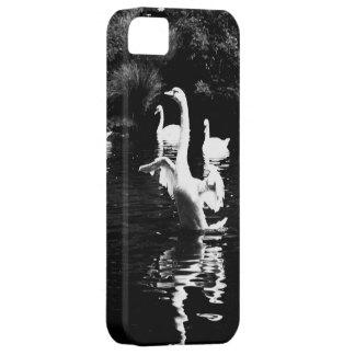 Cisne iPhone 5 Fundas